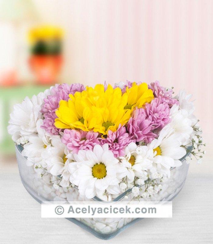 Kalp Çiçekleri